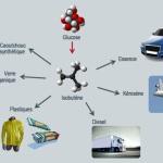 Global bioenergies