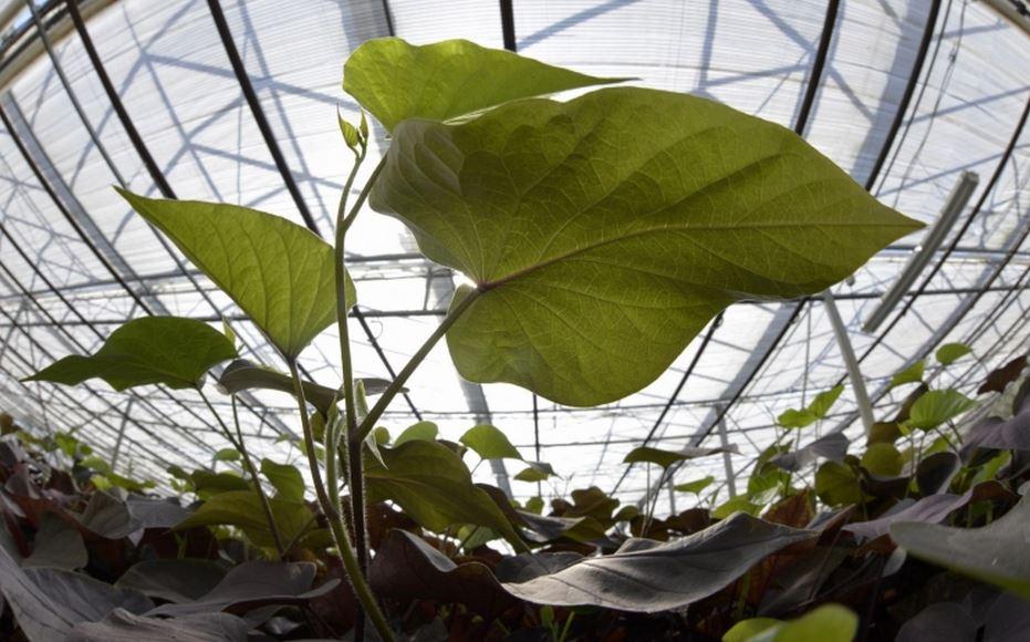 Les plantes traire se greffent sur alternext greenunivers for Recherche sur les plantes