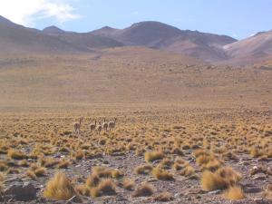 Le désert d'Atacama, au Chili. (Crédit : Flickr/Robin Fernandes)