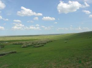 prairie mongole
