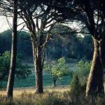 La forêt méditerranéenne a-t-elle assez d'énergie pour les grandes centrales biomasse ?