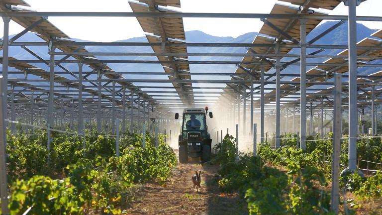 Agrivoltaïsme : quels sont les 300 projets ciblés par Sun'Agri ?