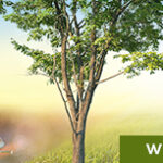 SER_greenunivers_banniere-web_600x153